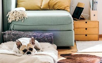 Co robić w domu w czasie kwarantanny? - porady na nudę