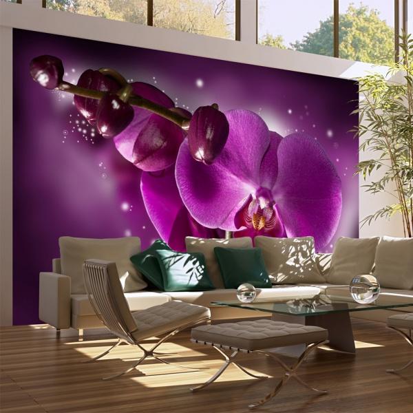 Fototapeta - Baśń i orchidea (450x270 cm) A0-F4TNT0078-P