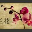 Fototapeta - Japanese orchid A0-F4TNT0075-P