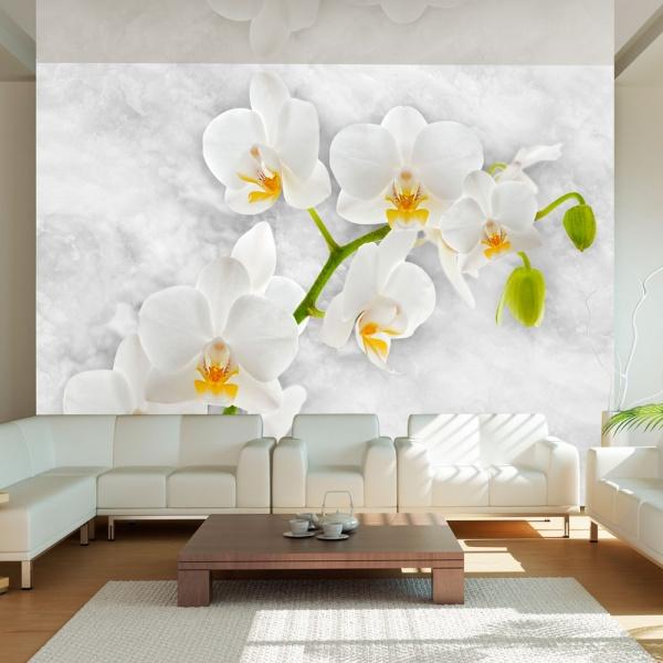 Fototapeta - Liryczna orchidea - biel (300x210 cm) A0-XXLNEW010376