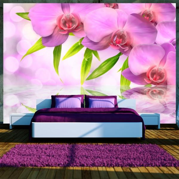 Fototapeta - Orchidee w kolorze lila (300x210 cm) A0-XXLNEW010189
