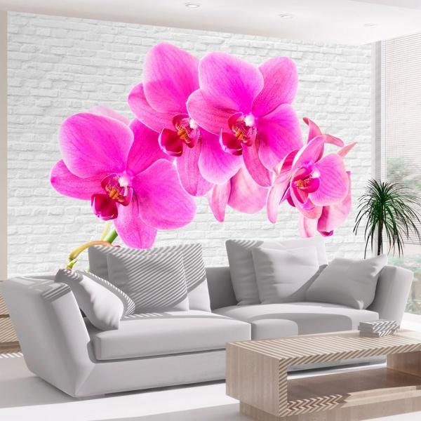 Fototapeta - Różowe pobudzenie (300x210 cm) A0-XXLNEW010392