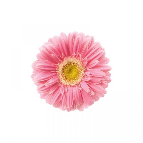 Mata na stół 35 cm Nuova R2S Easy Life różowy gerber T22210