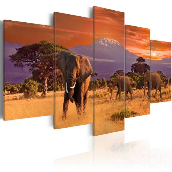 Obraz - Afryka: słonie (100x50 cm) A0-N3071