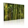 Obraz - Bambus i zieleń A0-N1586