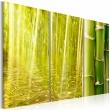 Obraz - Bambus w tafli wody A0-N1587