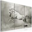 Obraz - Biały koń w ruchu A0-N1535