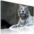Obraz - Biały tygrys A0-N1399