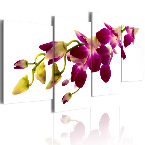 Obraz - Blask orchidei (80x45 cm) A0-N2203