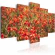 Obraz - Czerwone maki na zielonej łące A0-N1591