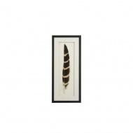 Obraz dekoracyjny Feath 1 czarny