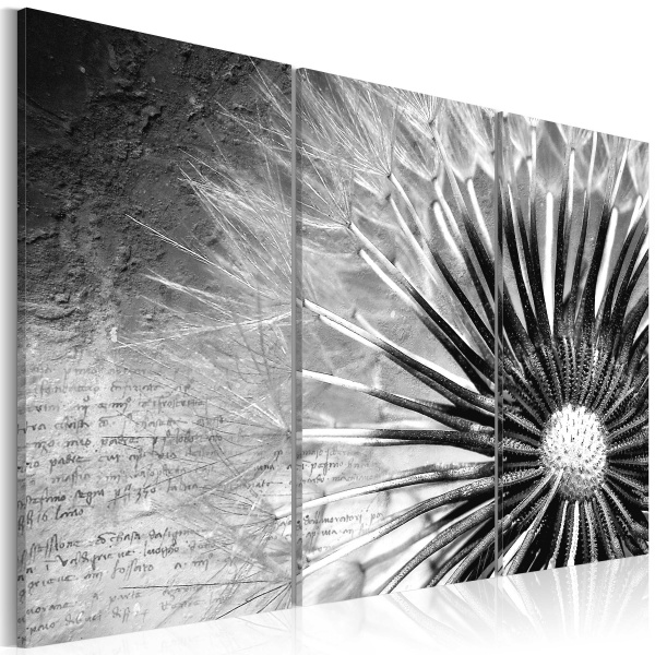 Obraz - dmuchawiec (czarno-biały) (60x40 cm) A0-N2626
