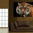 Obraz - Drapieżny tygrys A0-N1534