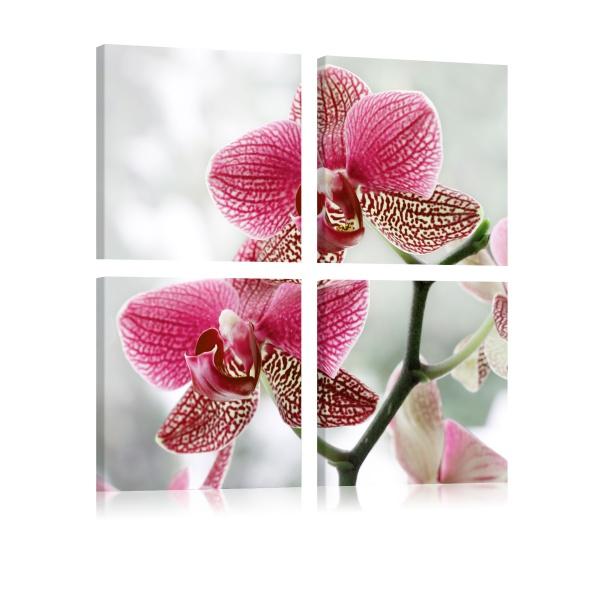 Obraz - Fantazyjna orchidea (40x40 cm) A0-N1933