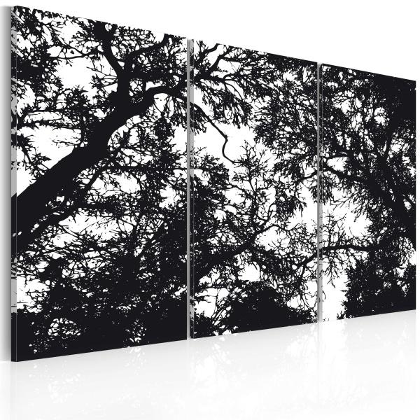 Obraz - Gęsty las (60x40 cm) A0-N2261