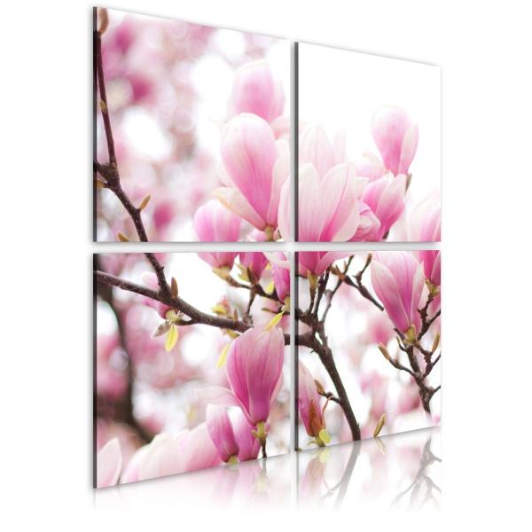 Obraz - Kwitnące drzewo magnolii (40x40 cm) A0-N1929