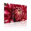 Obraz - Kwitnący ogród - dalia A0-N1588