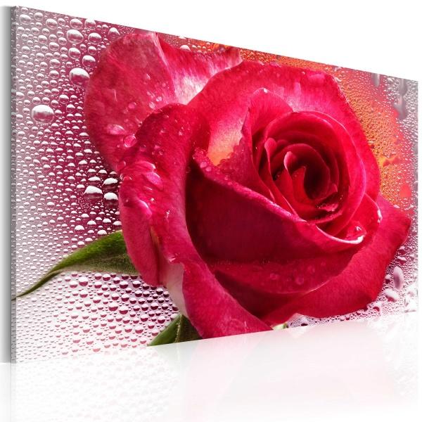 Obraz - Lady Rose (60x40 cm) A0-N2244