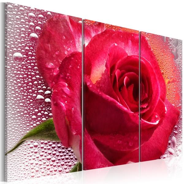 Obraz - Lady Rose - triptych (60x40 cm) A0-N2251