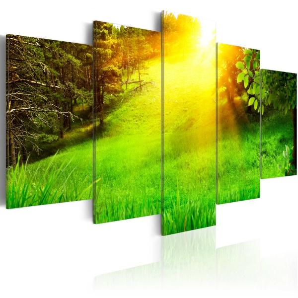 Obraz - Las i słońce (100x50 cm) A0-N3364