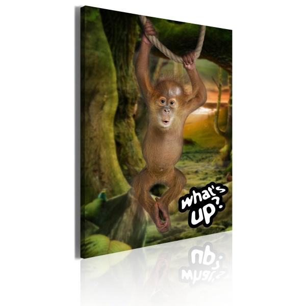 Obraz - Little monkey (50x70 cm) A0-OBRPLK1