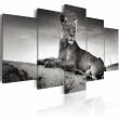 Obraz - Lwica na pustyni A0-N1523