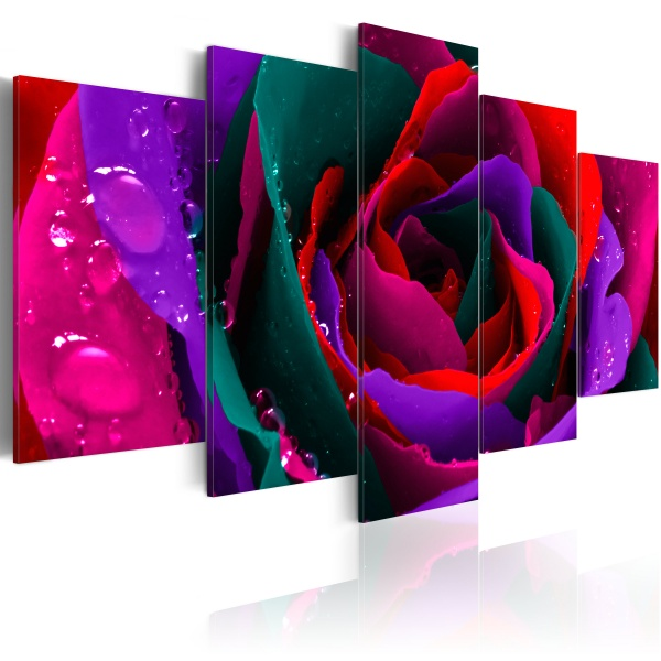Obraz - Multicoloured rose (100x50 cm) A0-N2355