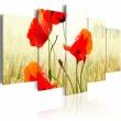 Obraz - Natura i czerwień maków A0-N1493