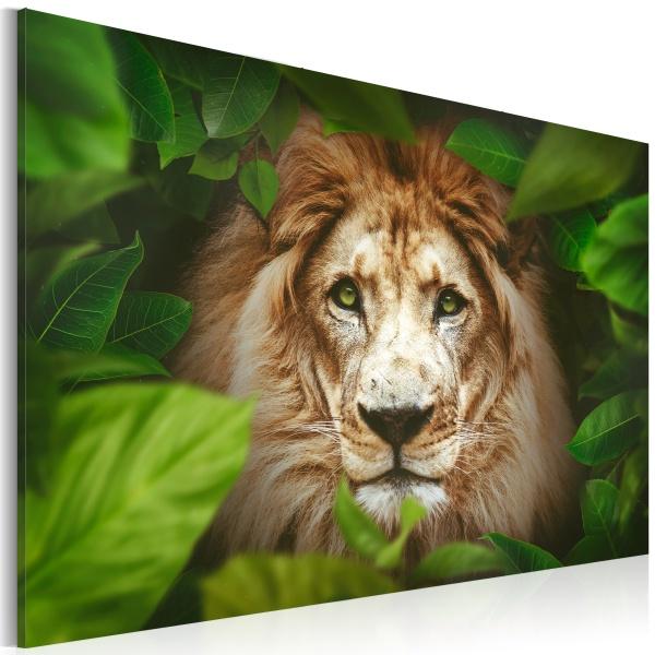 Obraz - Oczy dżungli (60x40 cm) A0-N2945