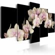 Obraz - Orchidea na kontrastującym tle A0-N1375