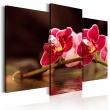 Obraz - Orchidea nad taflą jeziora A0-N1424