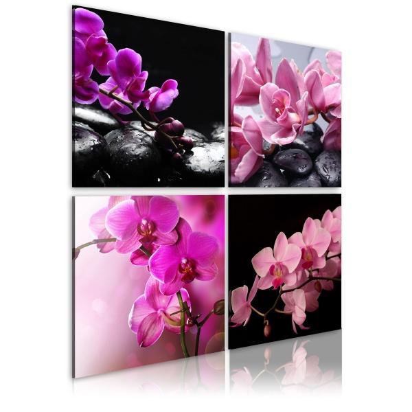 Obraz - Orchidee piękniejsze niż kiedykolwiek (40x40 cm) A0-N1932