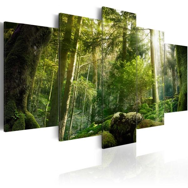 Obraz - Piękno lasu (100x50 cm) A0-N3777