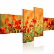 Obraz - Radosna makowa łąka A0-N1412