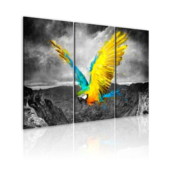 Obraz - Rajski ptak (60x40 cm) A0-N1843