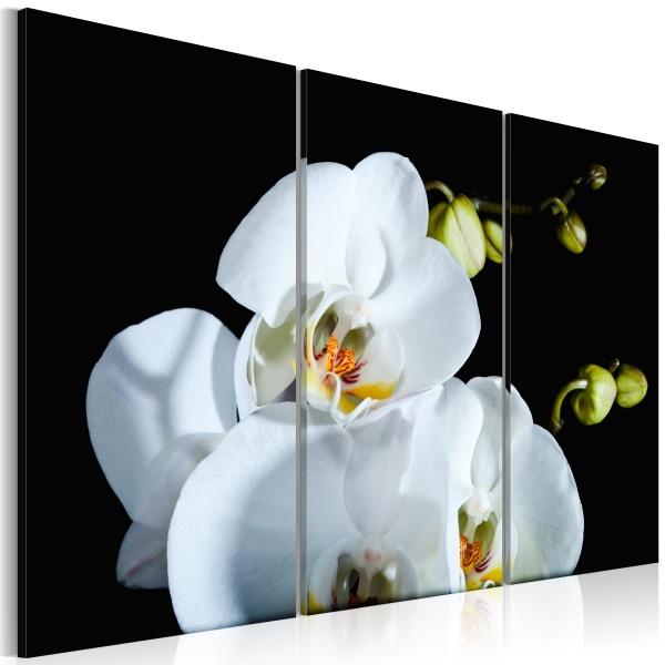 Obraz - Śnieżnobiała orchidea (60x40 cm) A0-N2297