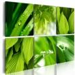 Obraz - Soczysta zieleń liści A0-N1605