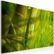 Obraz - Soczysta zieleń tropikalnych traw A0-N1592