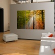 Obraz - Spokojny jesienny las A0-N1393