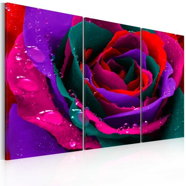 Obraz - Tęczowa róża (60x40 cm) A0-N2368