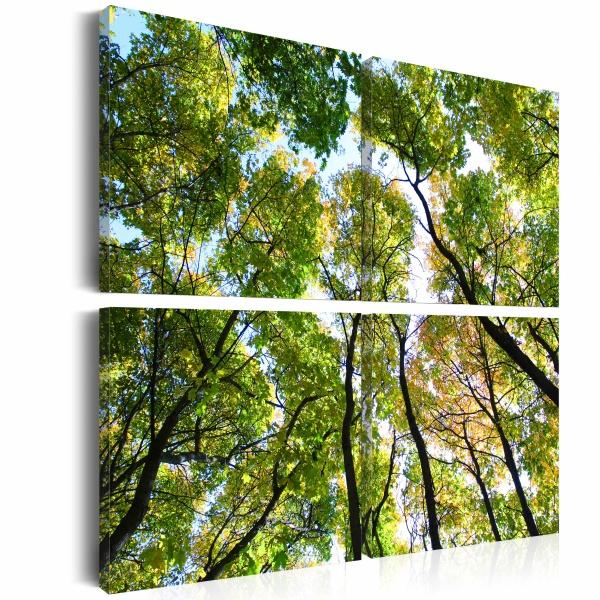 Obraz - Treetops (40x40 cm) A0-N1993