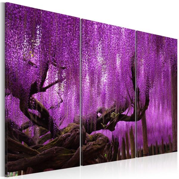 Obraz - Wisteria (60x40 cm) A0-N3499