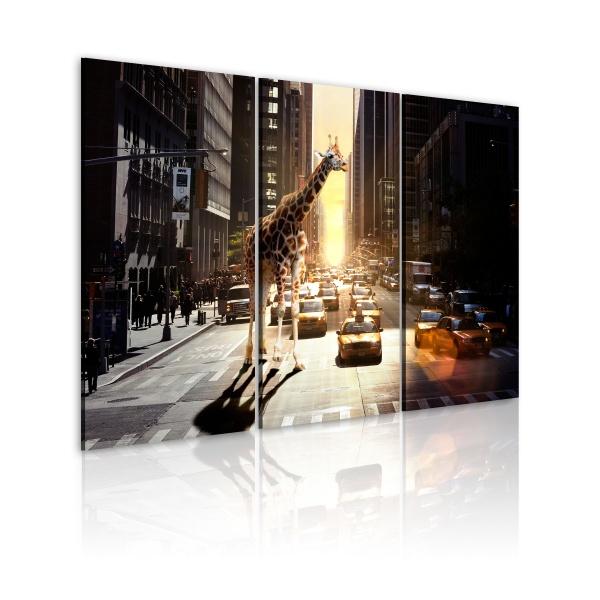 Obraz - Żyrafa w wielkim mieście (60x40 cm) A0-N1850