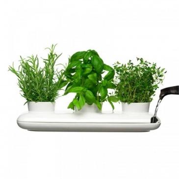 Potrójny wazon na zioła Sagaform Herbs & Spices