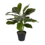 Roślina w donicy I 45cm Intesi